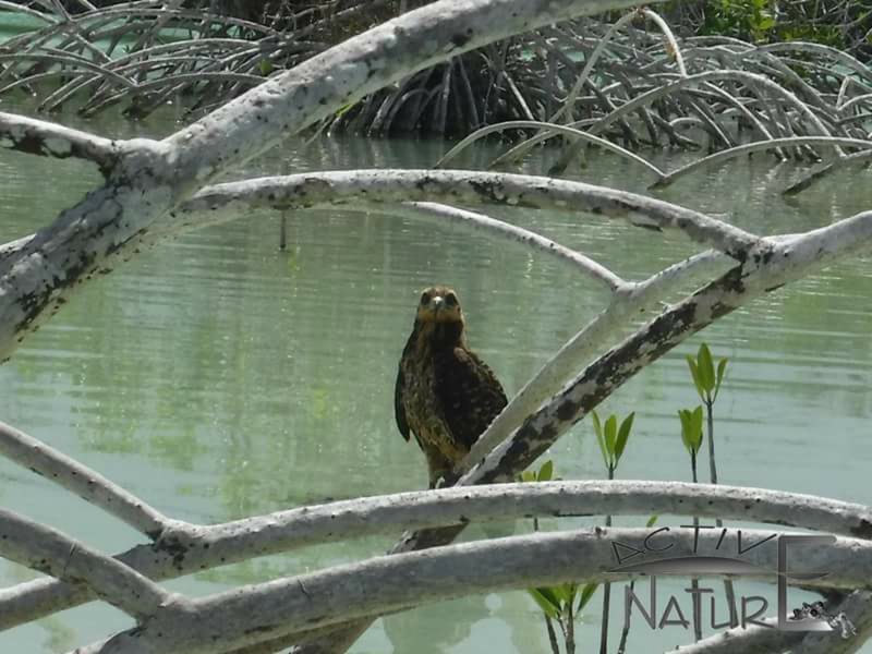 raptor-on-lake